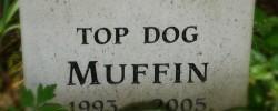 Pet Cemetery at Mount Usher Gardens
