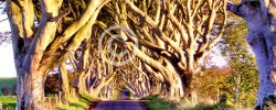 Dark Hedges © Michele Erdvig
