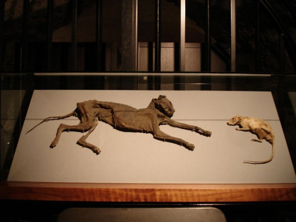 Mummified Cat and Mouse at Christchurch Cathedral - Photo by Rowan72 via Flickr Creative Commons