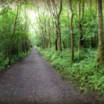 Knockma Wood - Photo by Corey Taratuta