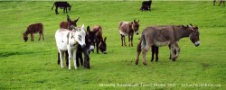 Rescued Donkeys at the Donkey Sanctuary in County Cork