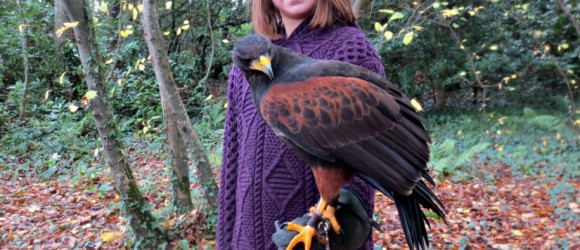 Though large the Harris Hawks are 'light as a feather'. A Hawk Walk at Mount Falcon is a fun family adventure during your Ireland vacation.