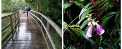 Along the Green Walk boardwalk at Glendalough, County Wicklow. Ireland travel tips | Ireland vacation | IrelandFamilyVacations.com